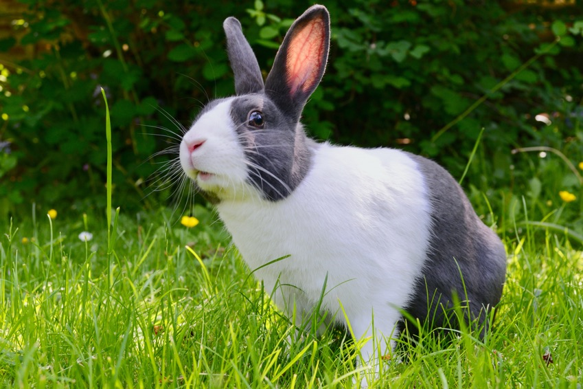 British Beastie of the Month: The Bouncing Bunny