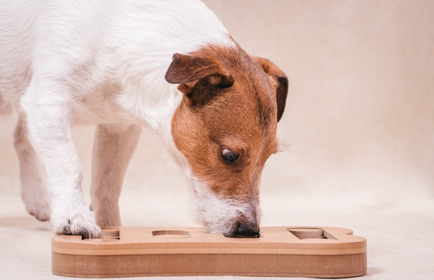 Can Brain Training Benefit My Dog?