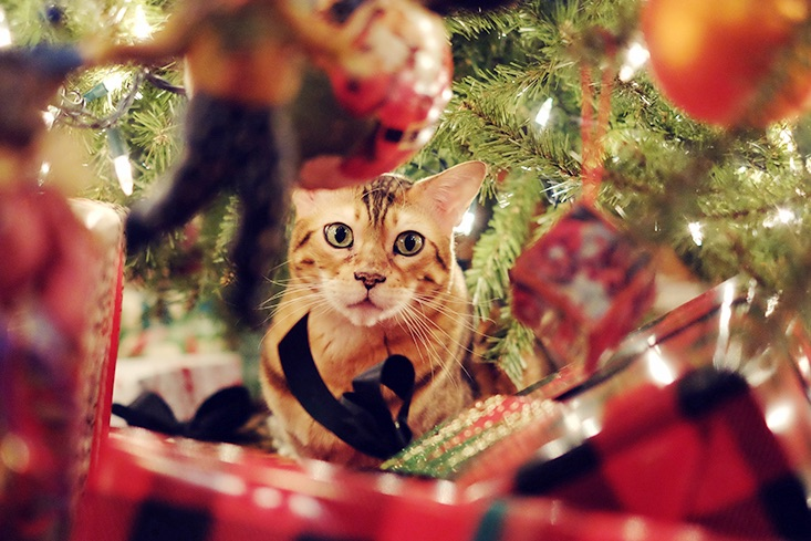 Got Your Christmas Tree Up? Here's How to Stop Your Cat Falling off It!