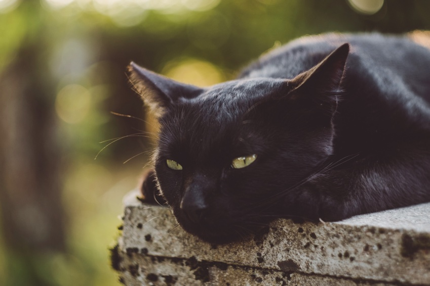 Is Your Cat Ready for Summer? 6 Things You Can Do to Help Them Chill Out