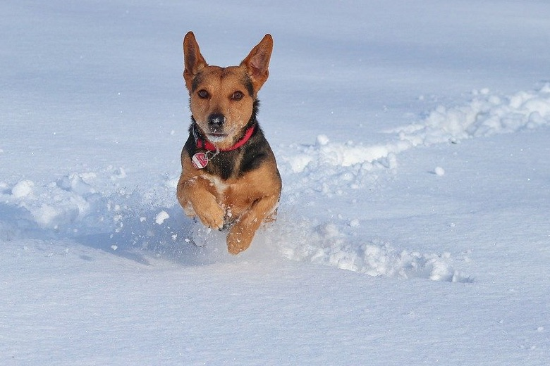 Protecting Our Pets in the Winter: What Are Some of the Bigger Dangers?