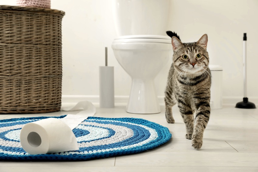 Should I Train My Cat to Use The Toilet?