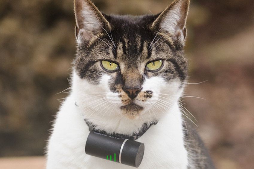 Tracking Your Cat: Is It Worth the Tech?