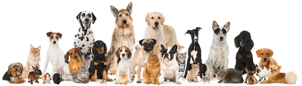 pawsr blog cats and dogs banner