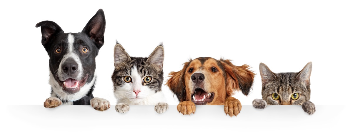pawsr cats and dogs banner