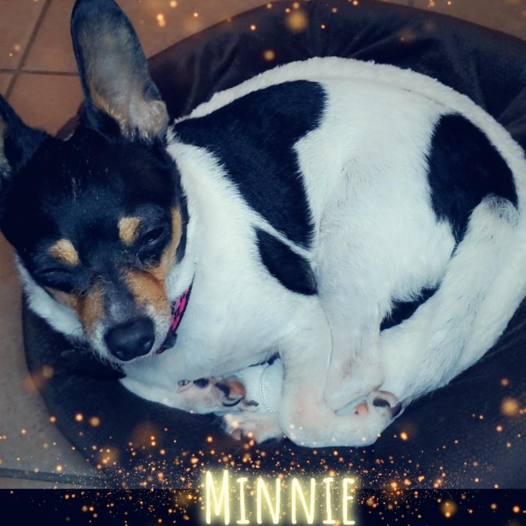 Minnie @ minnie1
